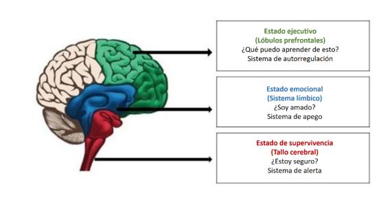 modelo-del-cerebro